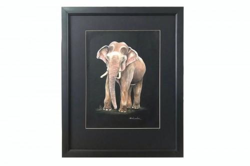 Tusker (Wildlife- Sri Lanka)