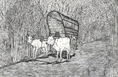 Bullock Cart in Ceylon