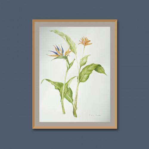 Tropical flora II