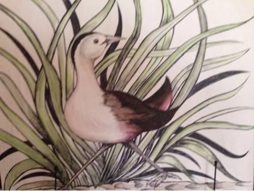 Birds of Srilanka