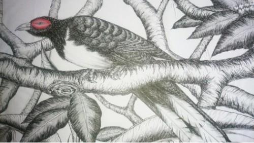 Birds of Srilanka.