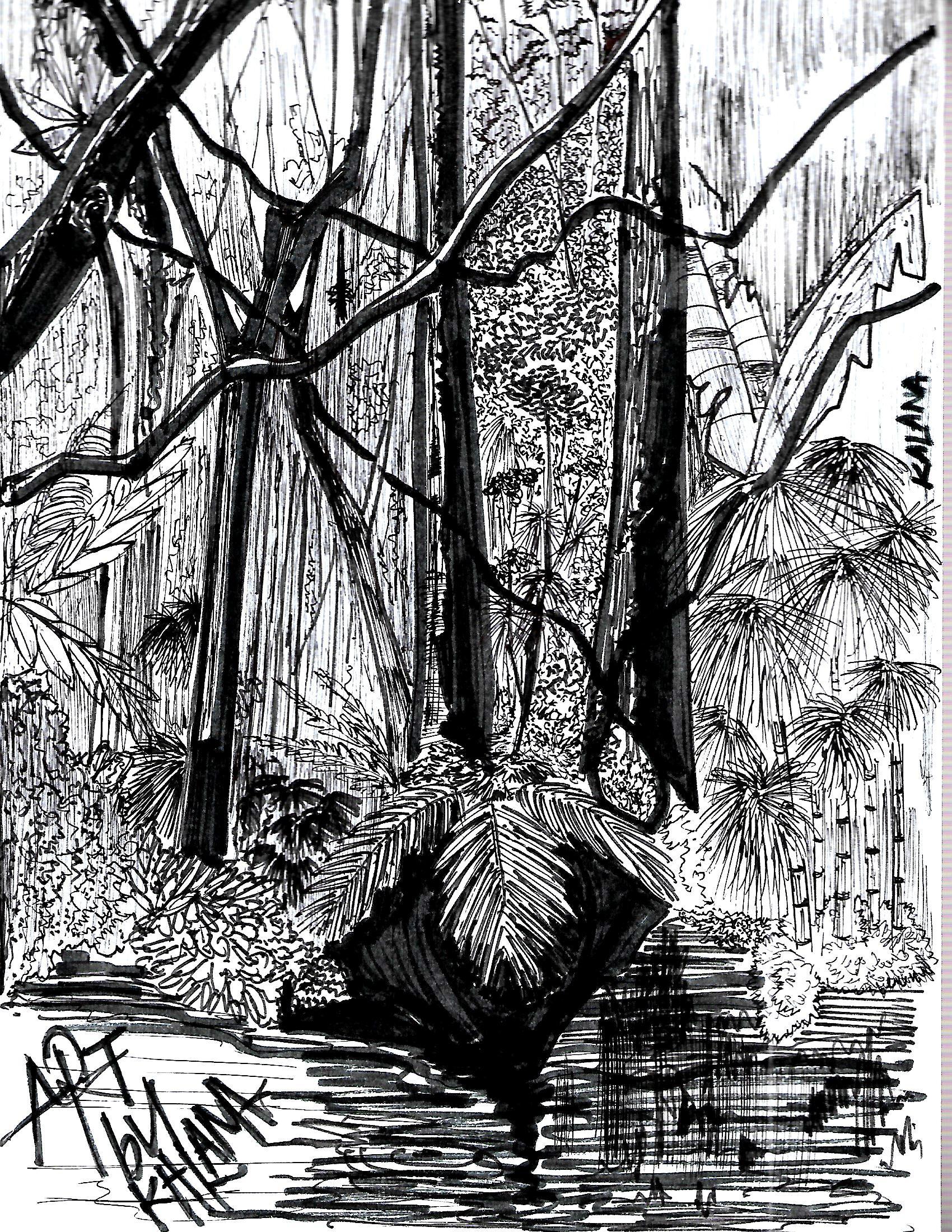 rain forest by Kalana Denuwan