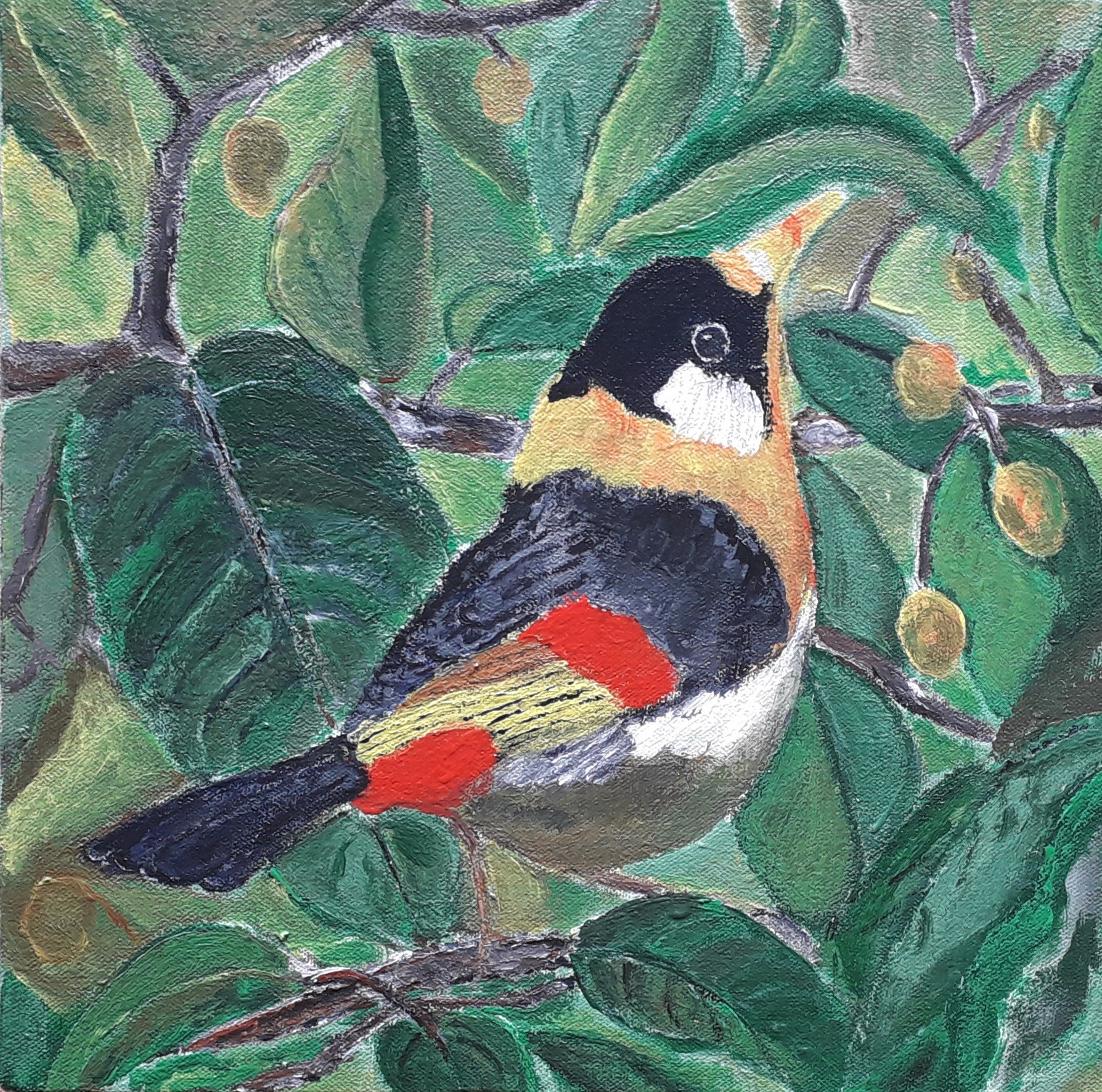 Silver- eared Mesia. by Moses Simpson David