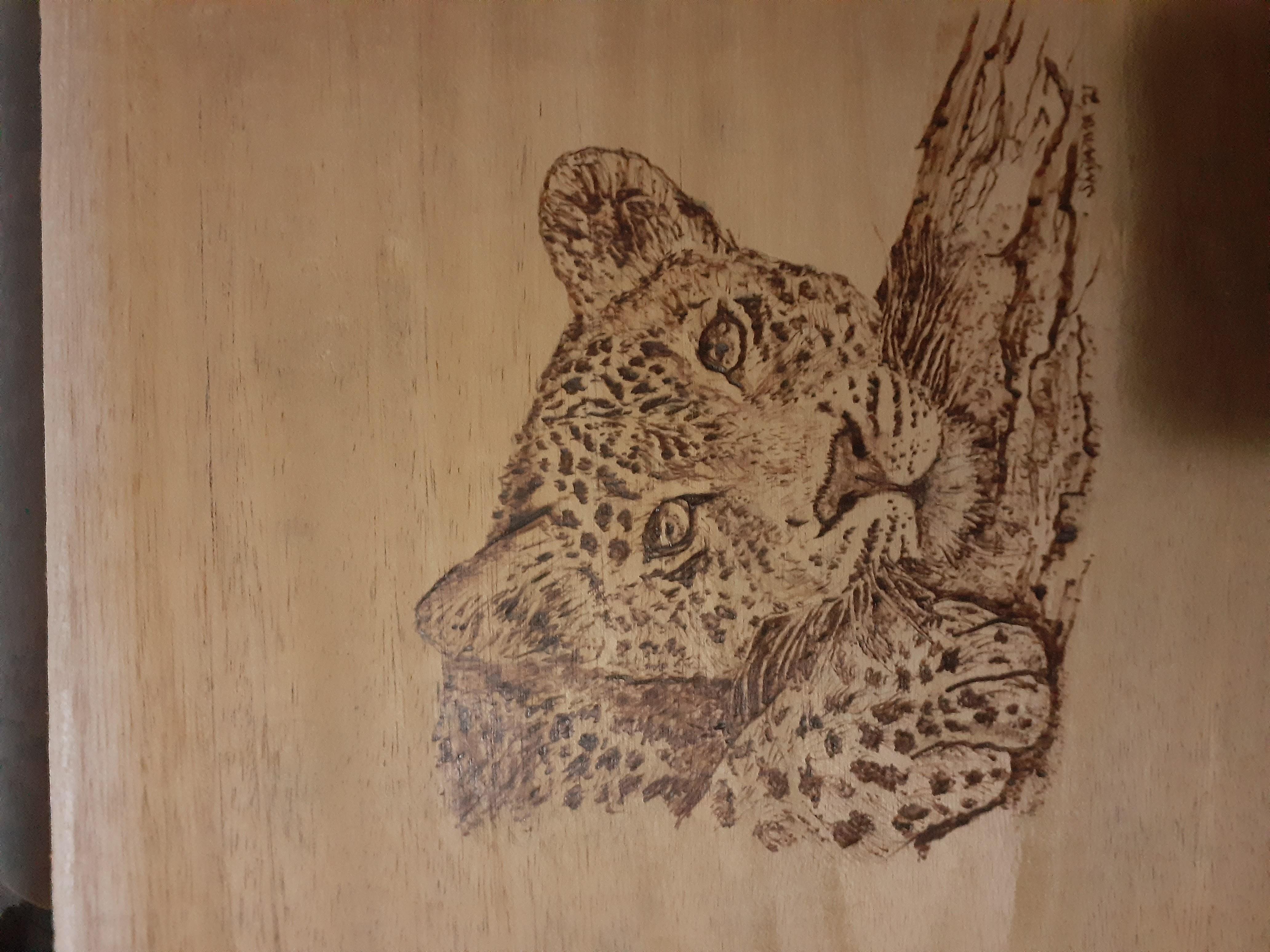 Leopard at rest by Shyama Gunawardhana