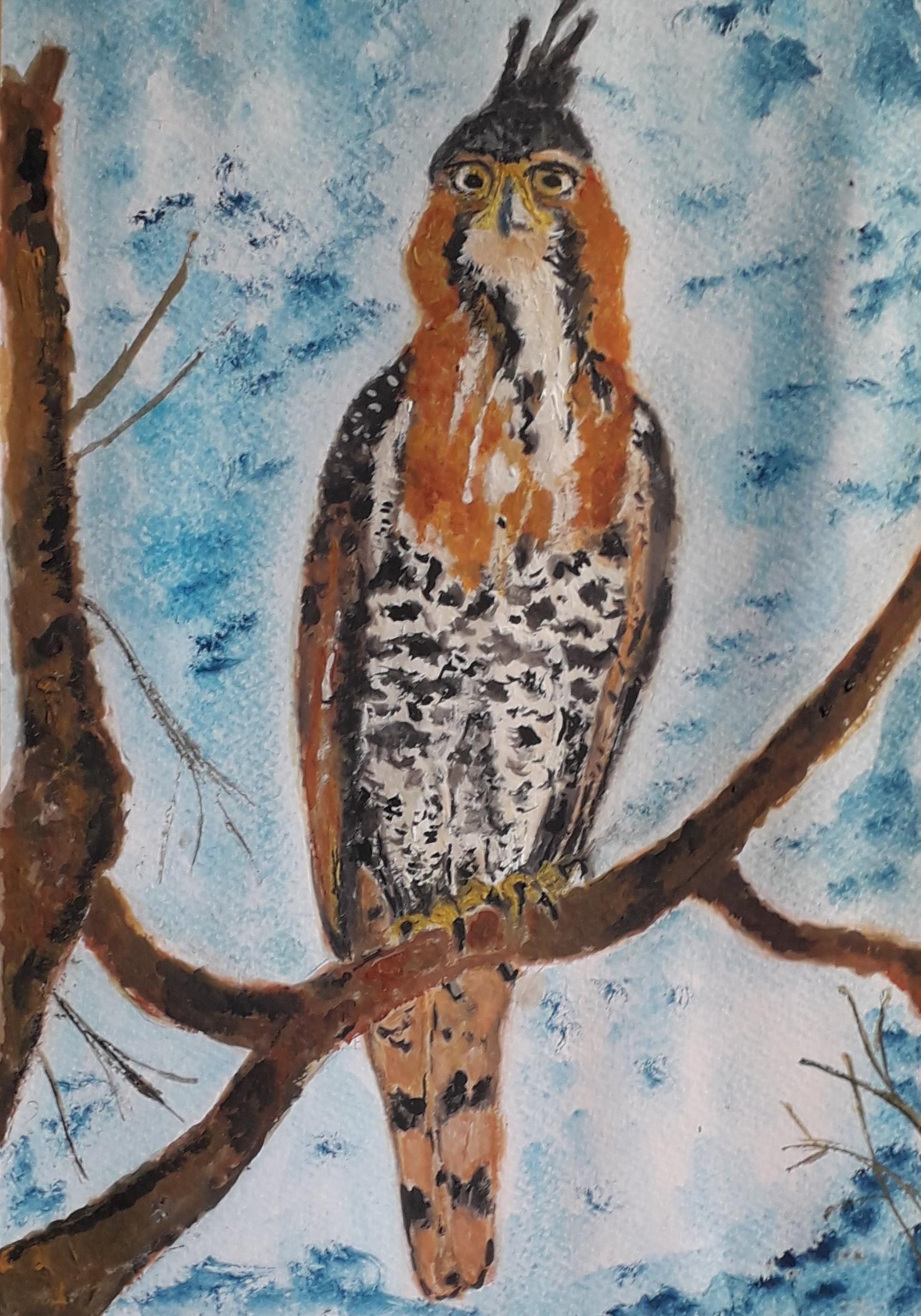 Hawk by Simpson David