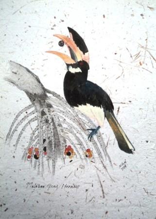 Black hornbill by Nihal Senarathna