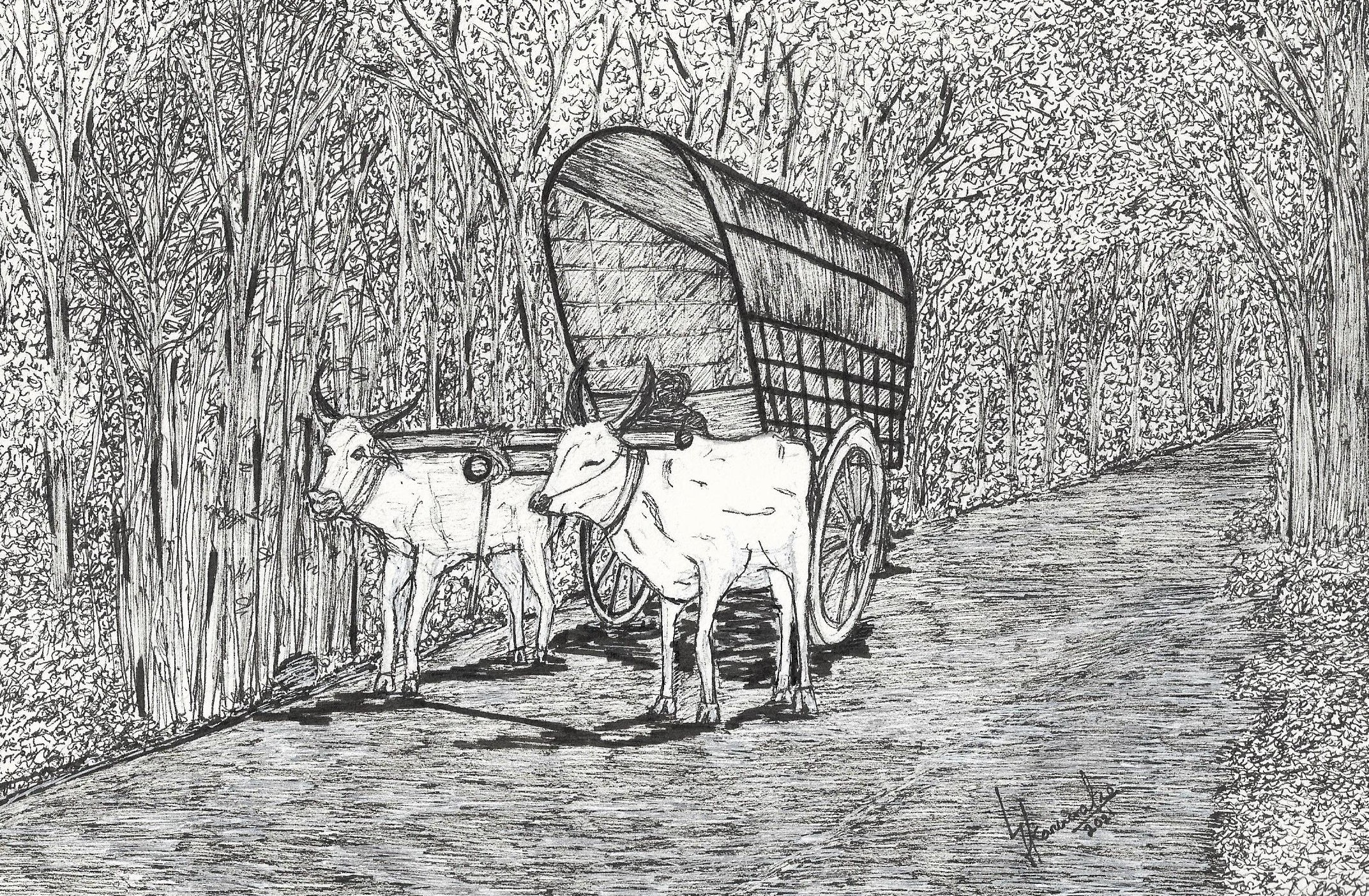 Bullock Cart in Ceylon by Car Artist Lahiru