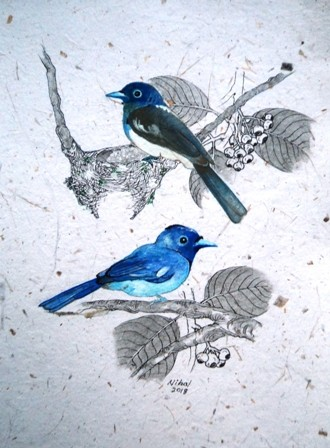 Sri lanka birds by Nihal Senarathna