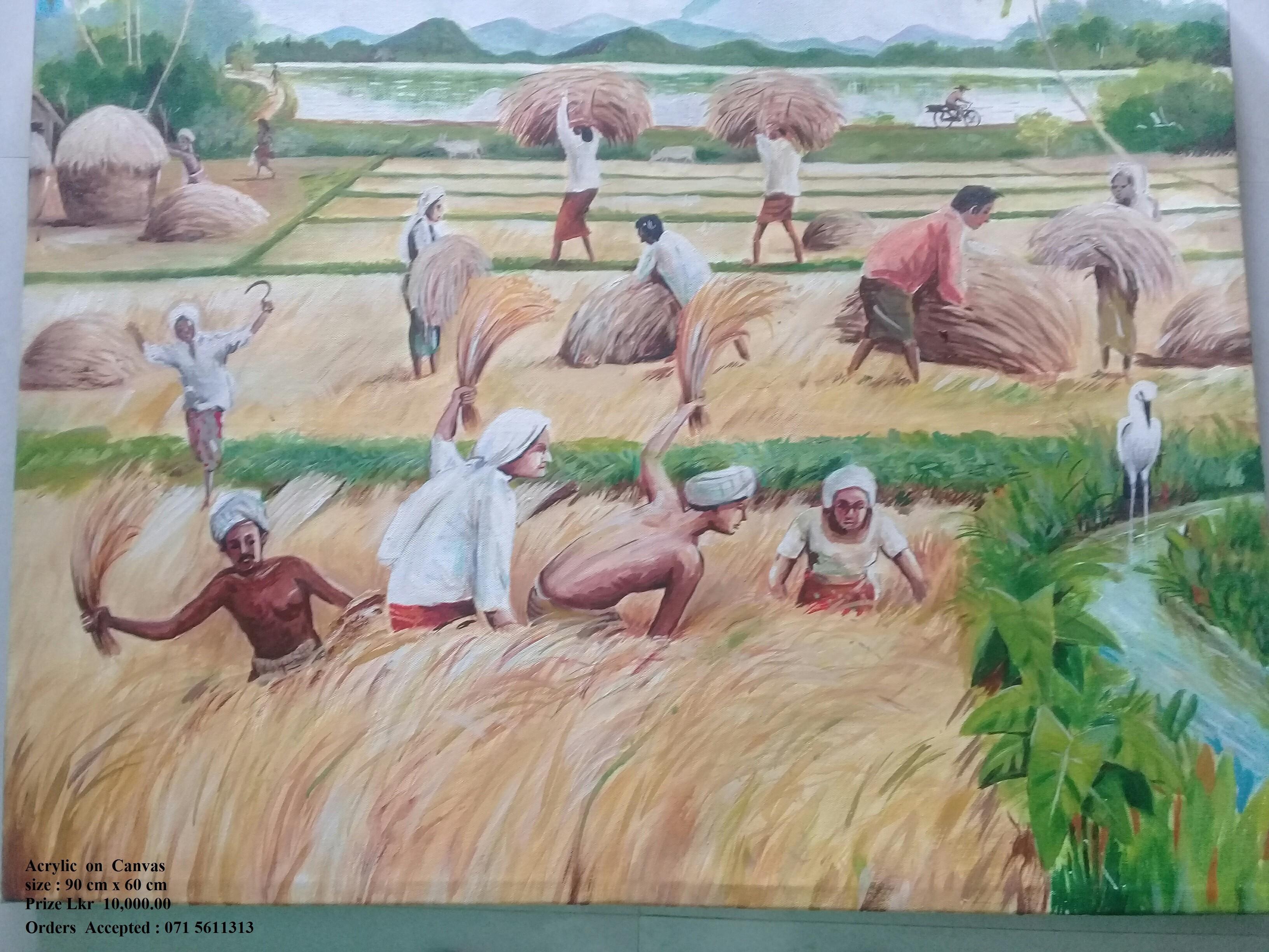 Harvesting by Wickramasinghe Arachchige Jayarathna