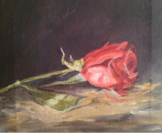 red rose by Fathima Haseena