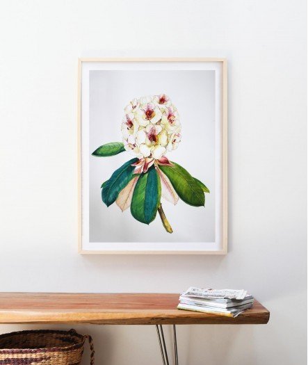 Rhododendron Flower by Thilini Jinadasa