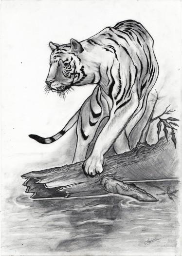 Tiger by Shehan Jayasinghe