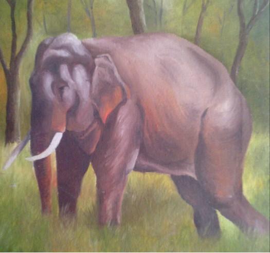 wild life by Fathima Haseena
