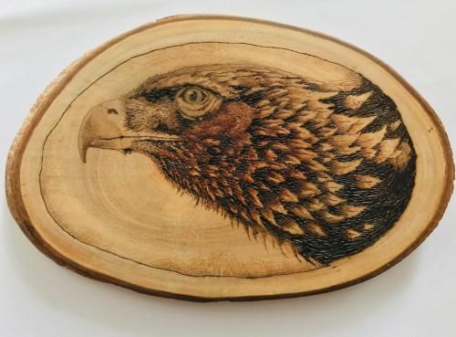 The waiting eagle